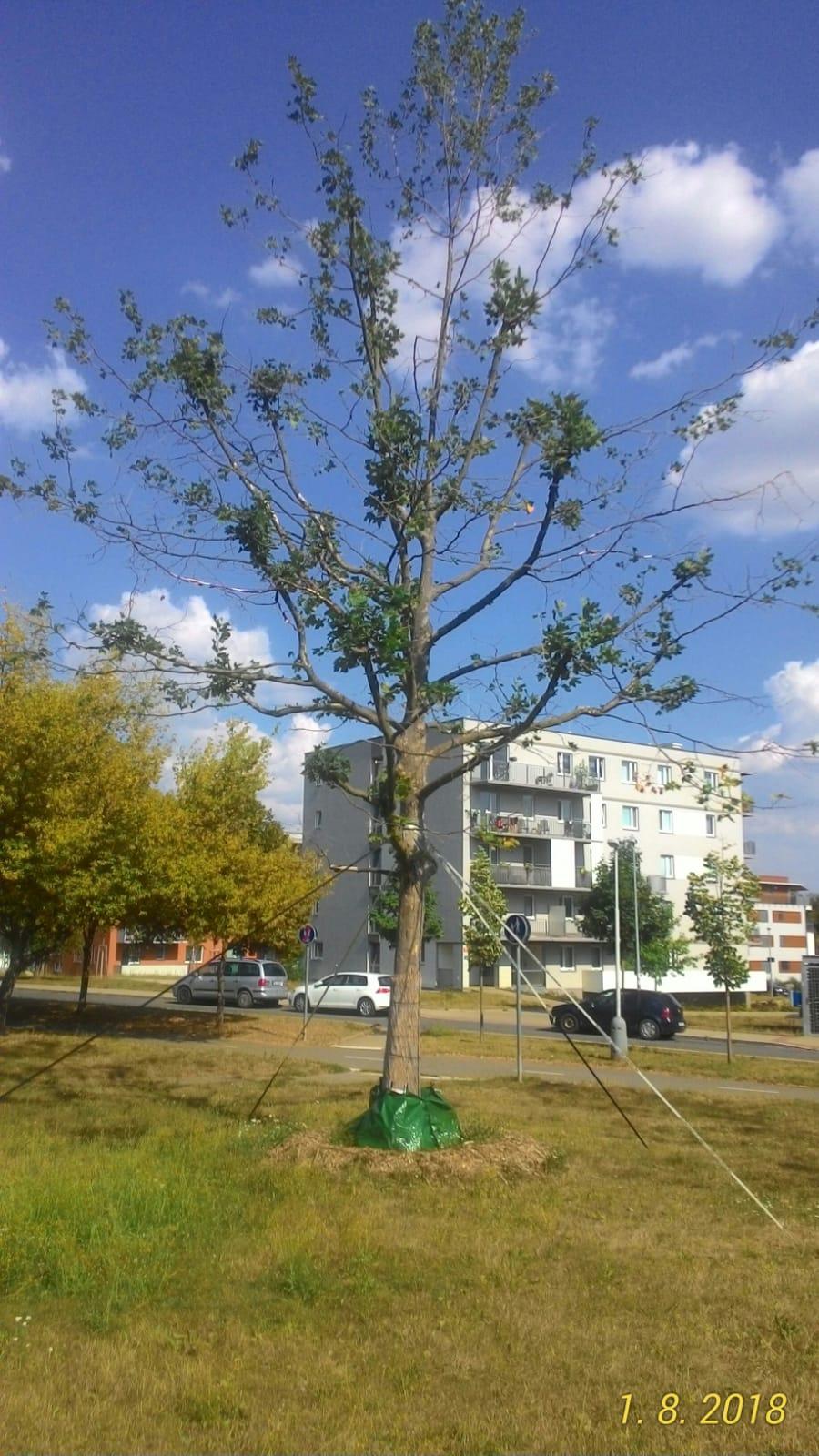 Zavlažovací vaky – prvními testery jsou stromy ve Frýdku-Místku a na Jižním Městě